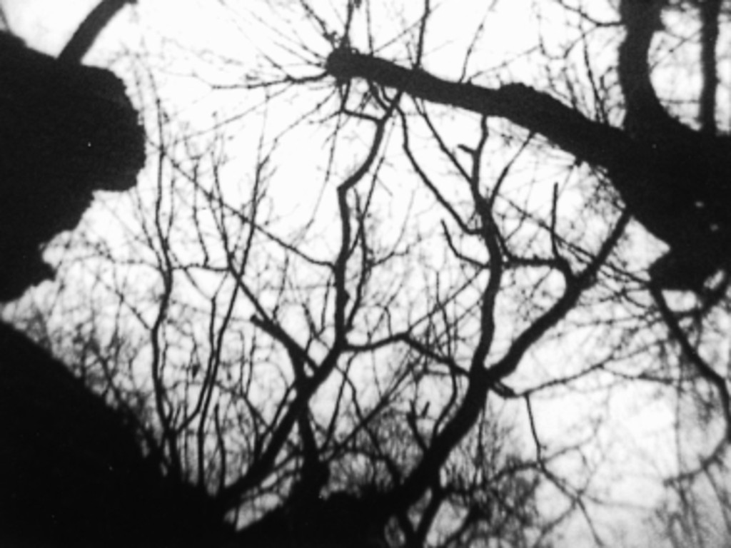 *Trees in Autumn*. 1975. Austria. Directed by Kurt Kren. Image courtesy sixpackfilm
