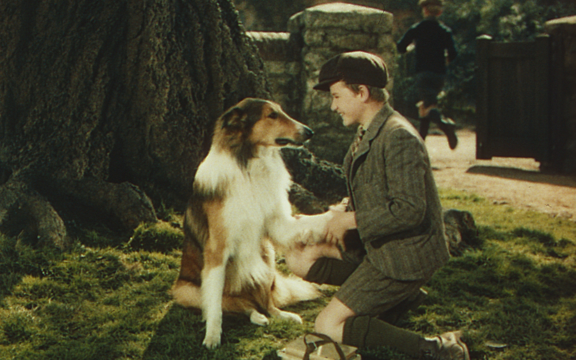 *Lassie Come Home*. 1943. USA. Directed by Fred M. Wilcox. Image courtesy George Eastman House.