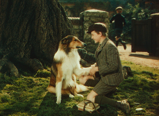 Lassie Come Home. 1943. USA. Directed by Fred M. Wilcox. Image courtesy George Eastman House.