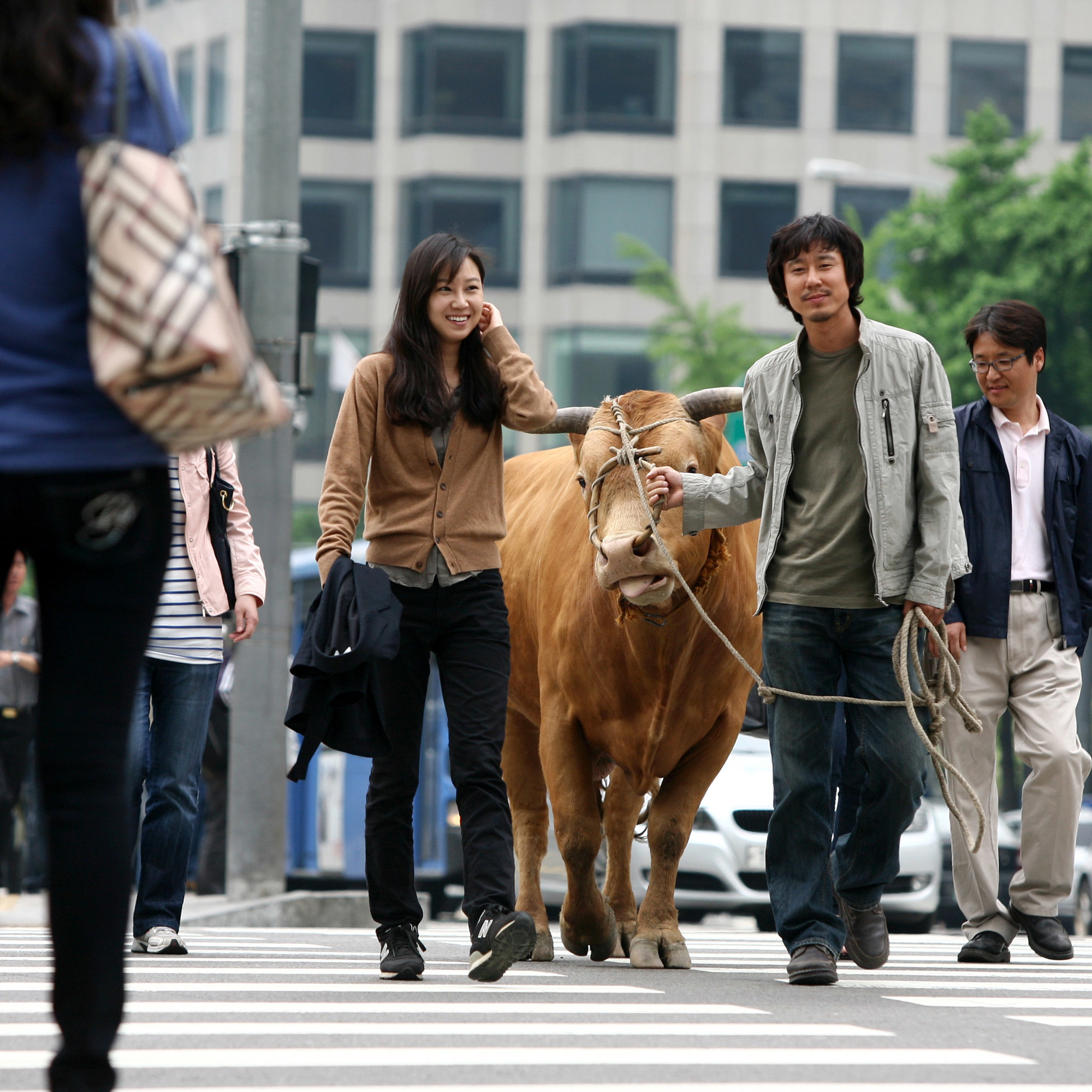 Rolling Home with a Bull. 2010. South Korea. Directed by Im Soon-rye