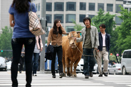 *Rolling Home with a Bull*. 2010. South Korea. Directed by Im Soon-rye