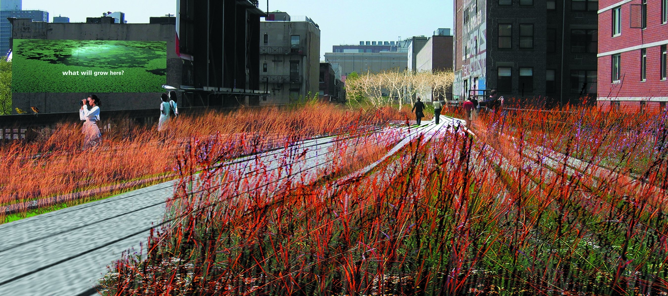 Field Operations and Diller Scofidio + Renfro. The High Line, New York, New York. 2004–05. Perspective of grasslands and planking system, 2004
