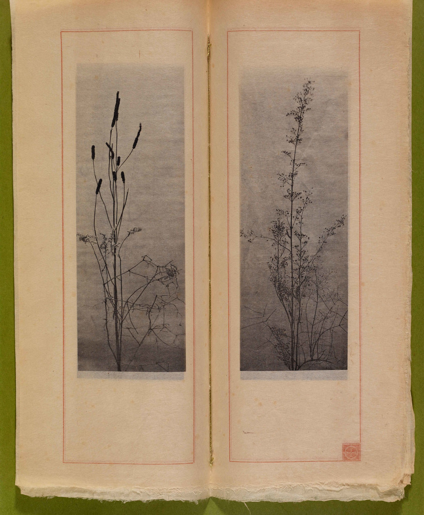 "Dried grasses and seedpods. n.d. Photogravures on Japanese paper, page 7 1⁄2"" x 2 3⁄4"" (19.1 x 7 cm). Inset in William C. Gannett. *The House Beautiful* (River Forest, Ill.: Auvergne Press, 1896–98). Avery Architectural & Fine Arts Library, Columbia University, New York"