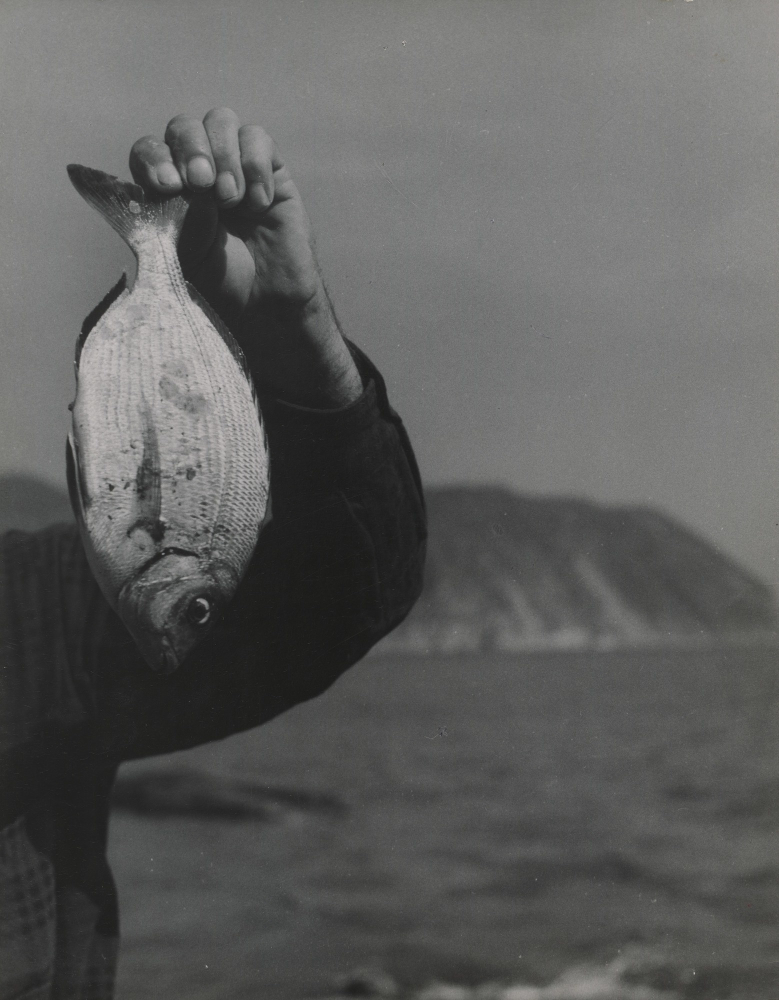 Emmy Andriesse. White Fish and Arm. c. 1950