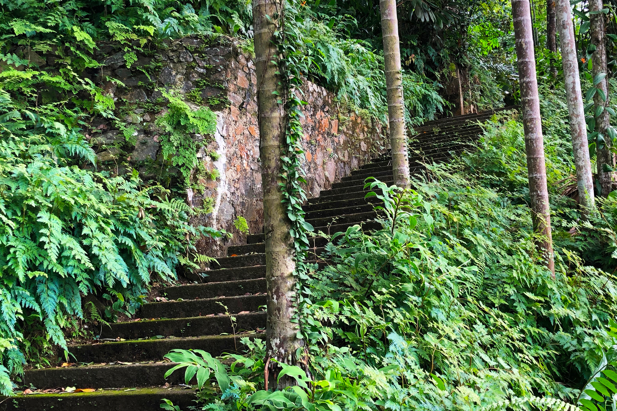 Stairs from the Red Terrance to the Water Garden, Lunuganga Estate (1949–present). Photo: Sean Anderson