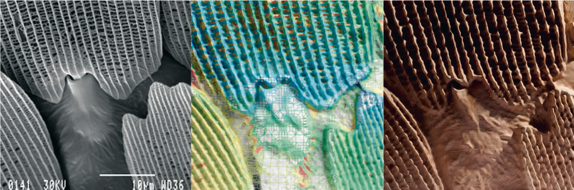 Subterrain. Micrograph image of a butterfly wing (left); analysis of material behavior according to stress, strain, heat flow, stored energy, and deformation from applied loads and temperature differences (middle); reconstructed tissue (right). Courtesy Neri Oxman.