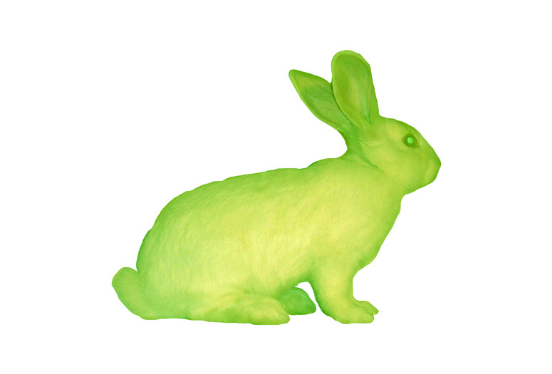 Eduardo Kac. GFP Bunny. 2000. Transgenic artwork. Alba, the fluorescent rabbit. Courtesy Henrique Faria Fine Art