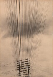 "Tina Modotti. Telephone Wires, Mexico. c. 1925. Palladium print, 8 15/16 x 6 5/16"" (22.8 x 16.1 cm). Gift of Miss Dorothy M. Hoskins"