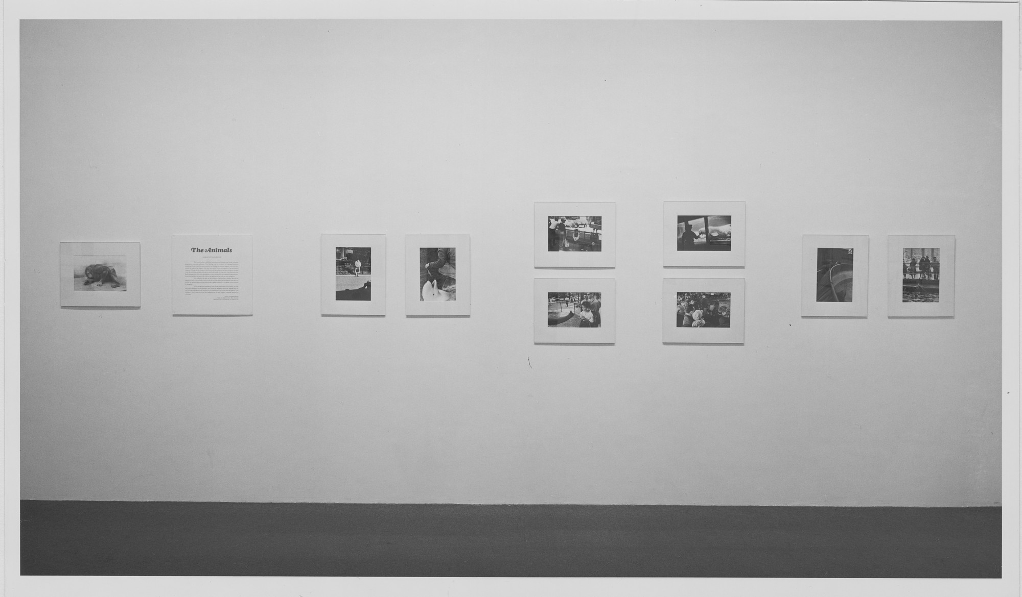 "Installation view of the exhibition, ""Gary Winogrand:  The Animals."" October 24, 1969–January 18, 1970. Photographic Archive. The Museum of Modern Art Archives, New York. IN905.1. Photograph by James Mathews."