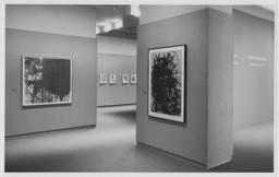 Europe, America: A Selection from the Collection. Jul 28–Oct 23, 1988. 1 other work identified