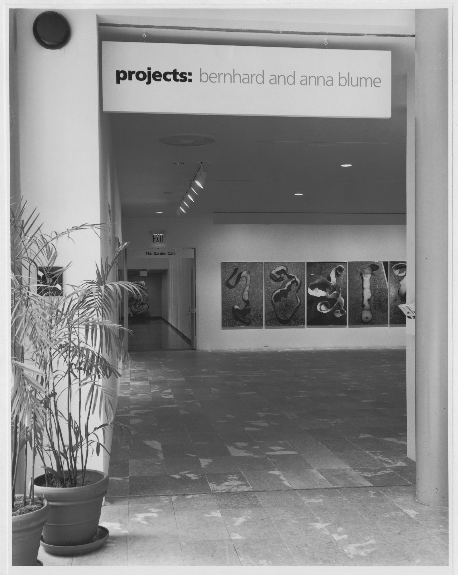 "Installation view of the exhibition, ""Projects 16: Bernhard and Anna Blume"" May 13, 1989–June 20, 1989. Photographic Archive. The Museum of Modern Art Archives, New York. IN1519.1. Photograph by Mali Olatunji."