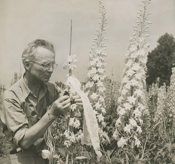 Edward Steichen with delphiniums (c. 1938), Umpawaug House (Redding, Connecticut). Photo by Dana Steichen. Gelatin silver print. Edward Steichen Archive, VII. The Museum of Modern Art Archives