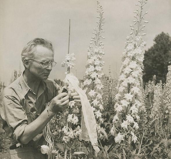 Edward Steichen with delphiniums (c. 1938), Umpawaug House (Redding, Connecticut). Photo by Dana Steichen. Gelatin silver print. Edward Steichen Archive, VII. The Museum of Modern Art Archives
