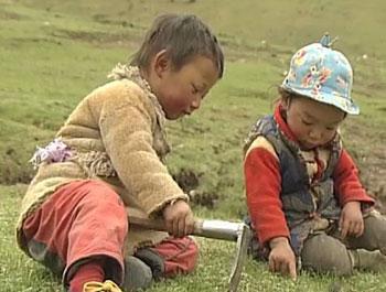 Yartsa Rinpoche (Precious Caterpillar). 2013. China/France. Directed by Dorje Tsering Chenaktsang. Courtesy of the filmmaker and Trace Foundation