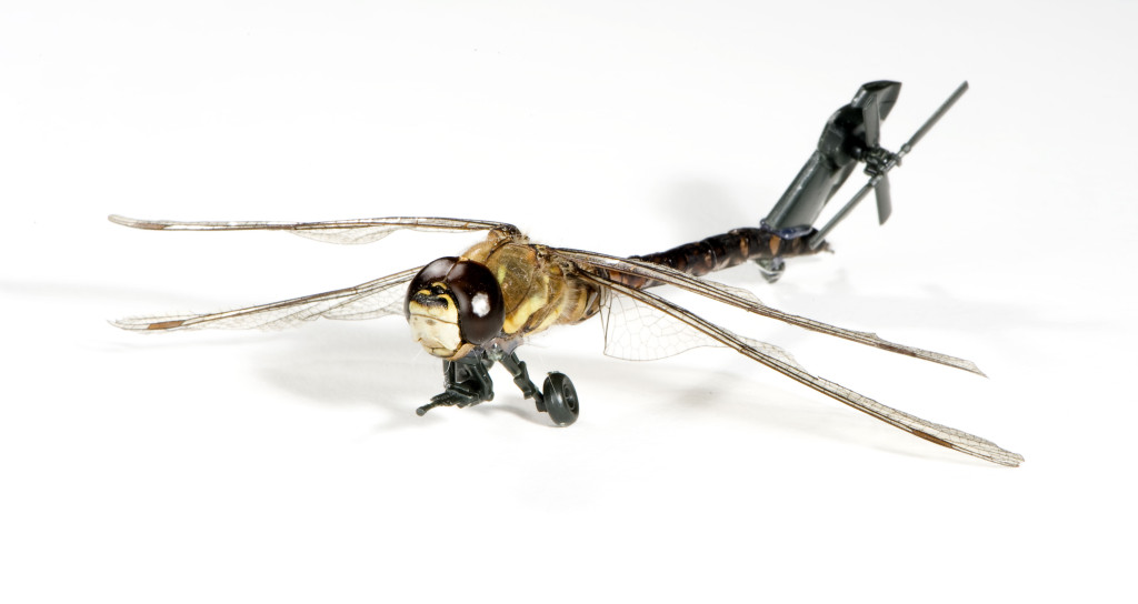 Job van der Molen (Dutch, 1984). Illustration Design Department (Est. TK). ArtEZ Institute of the Arts (est. 1949). Insect Army (There's nothing new under the sun). 2010. Preserved insect, plastic, batteries, glue, paint, metal. Dimensions variable. Image courtesy of the designer