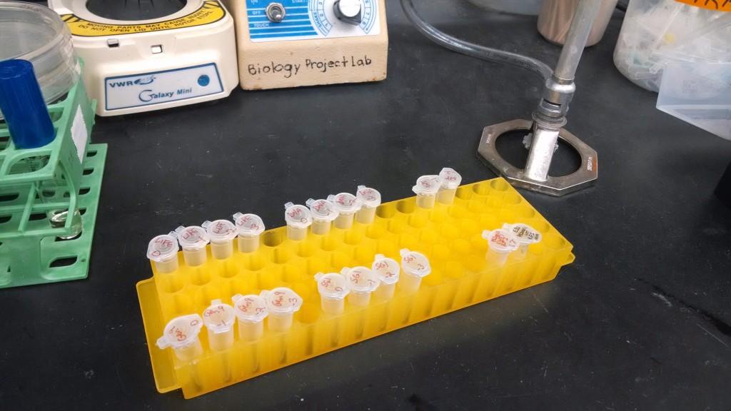Synthetic PhiX174 Bacteriophage (Hessel, Quinn & Jaschke) - Design