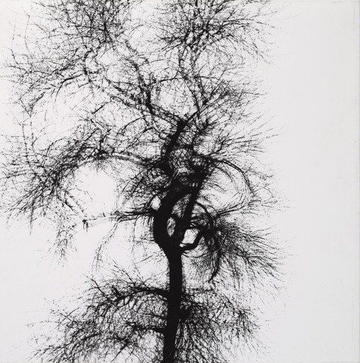 Harry Callahan. Tree, Chicago. 1956