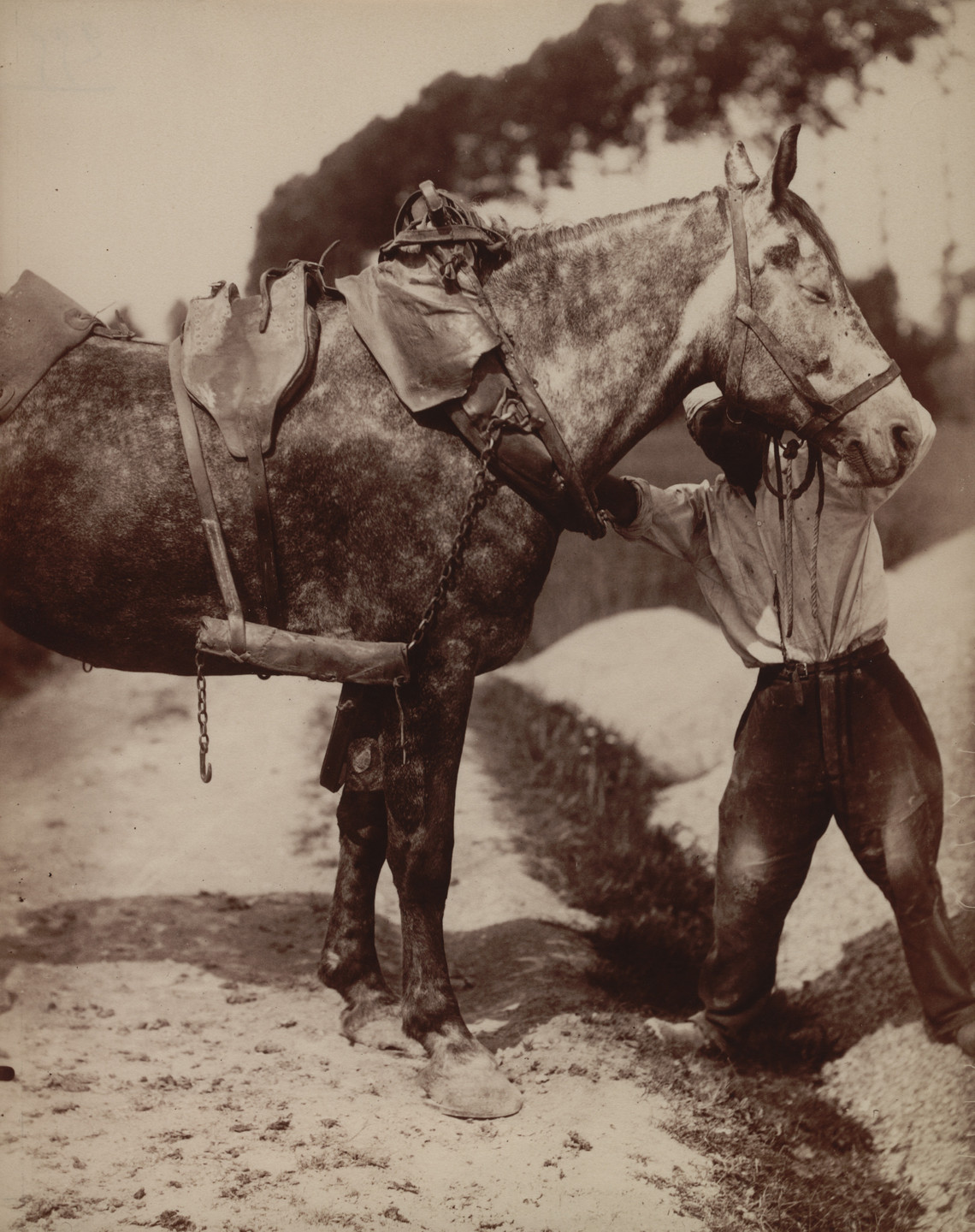 Eugène Atget. Untitled [Harness on Horse]. Before 1900?