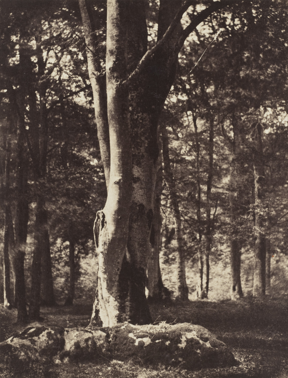 Gustave Le Gray. Forest of Fontainebleau. c. 1856
