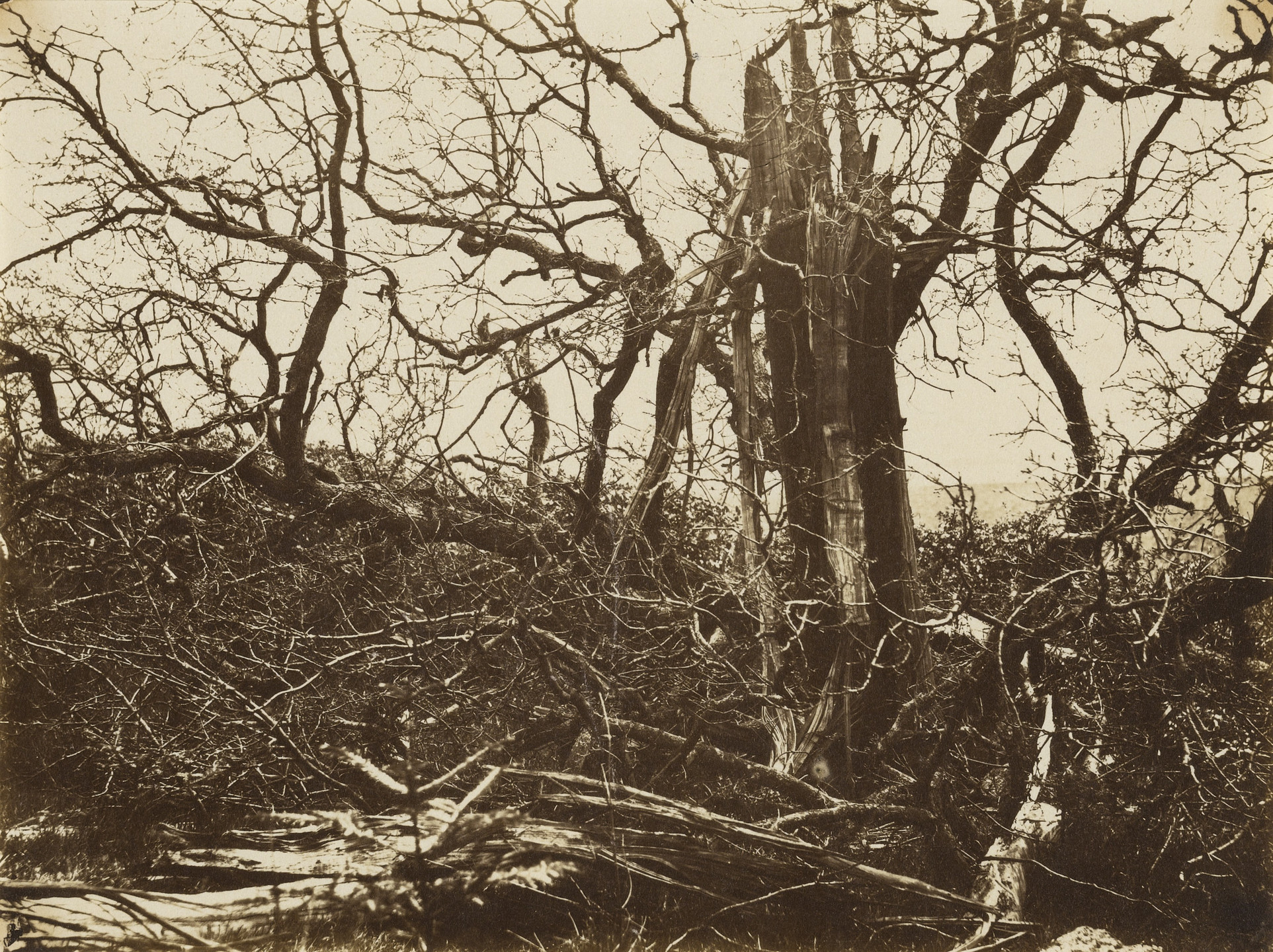 Alfred Capel Cure. Tree Struck by Lightning, Hill Hall, Essex. March 1858