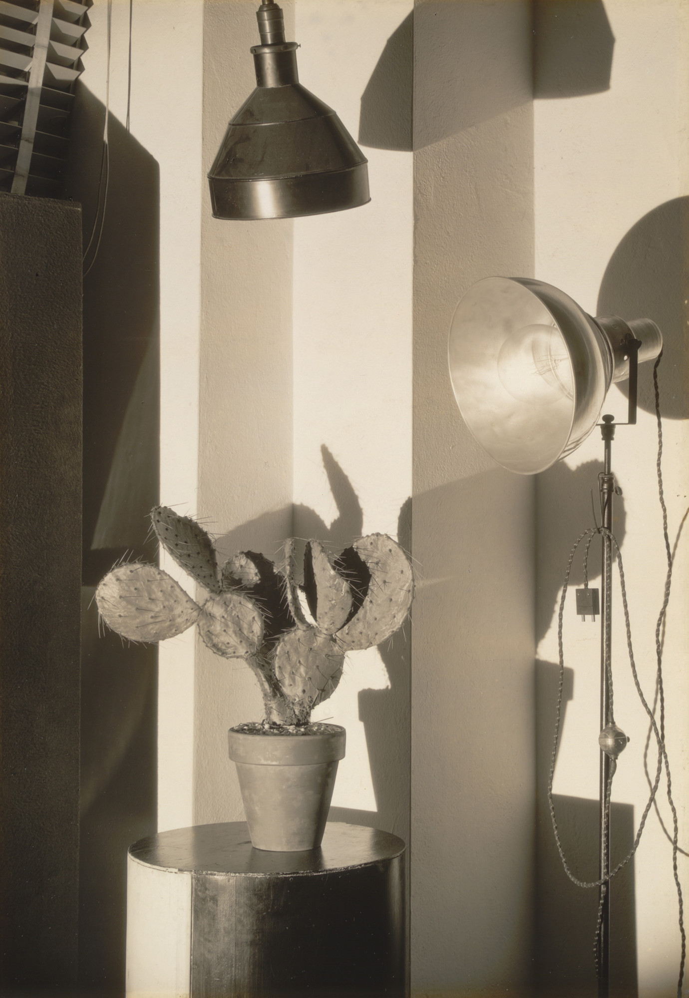 Charles Sheeler. Cactus and Photographer's Lamp, New York. 1931