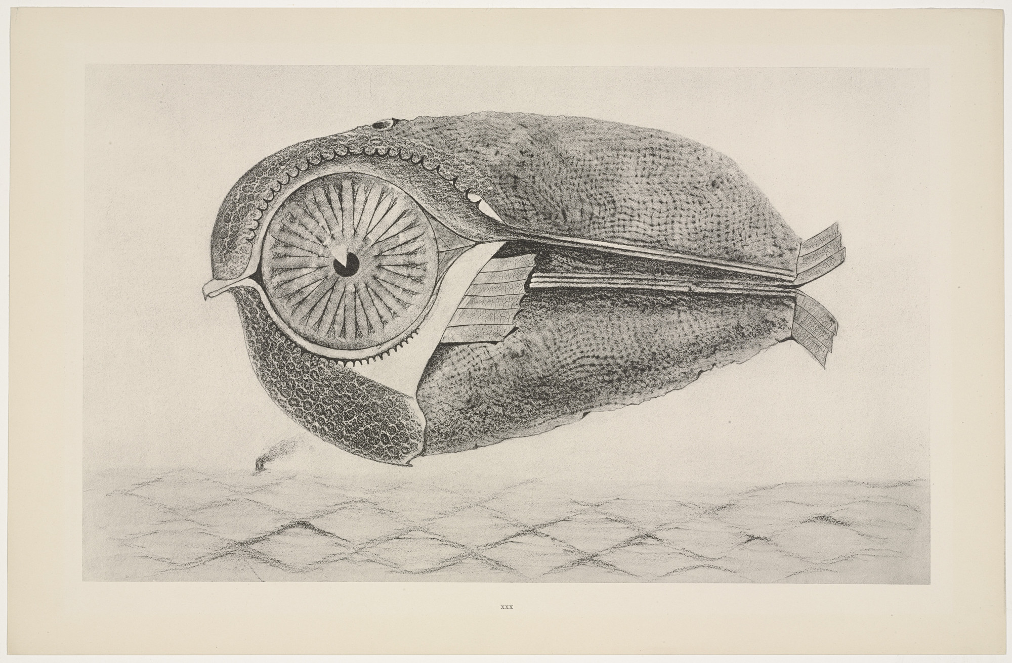 Max Ernst. The Fugitive (L'Évadé) from Natural History (Histoire Naturelle). c. 1925, published 1926