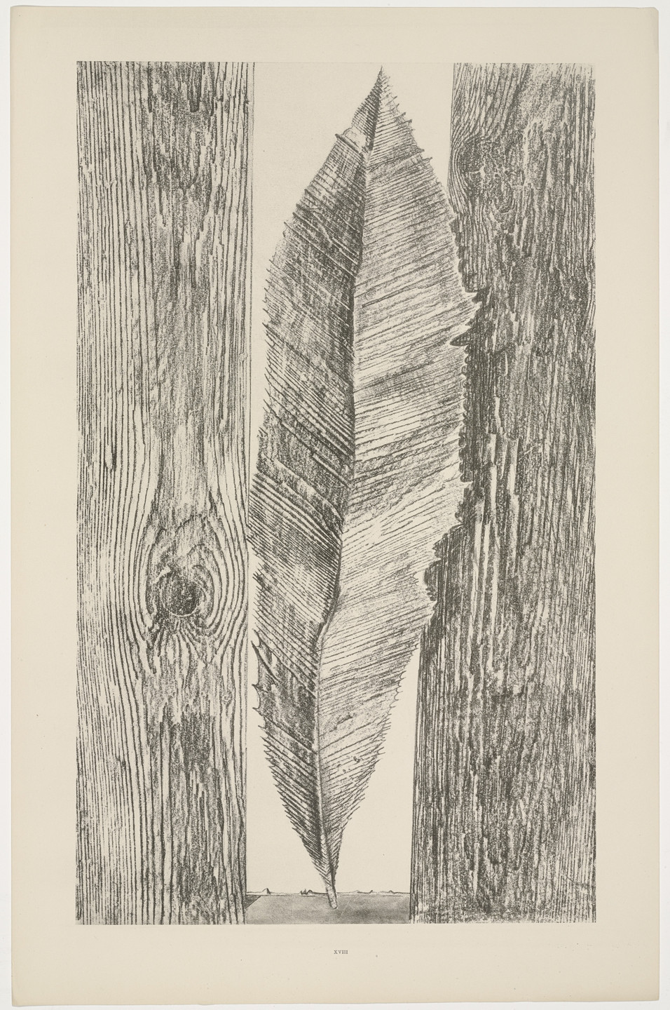 Max Ernst. The Habit of Leaves (Les Moeurs des feuilles) from Natural History (Histoire naturelle). c. 1925, published 1926