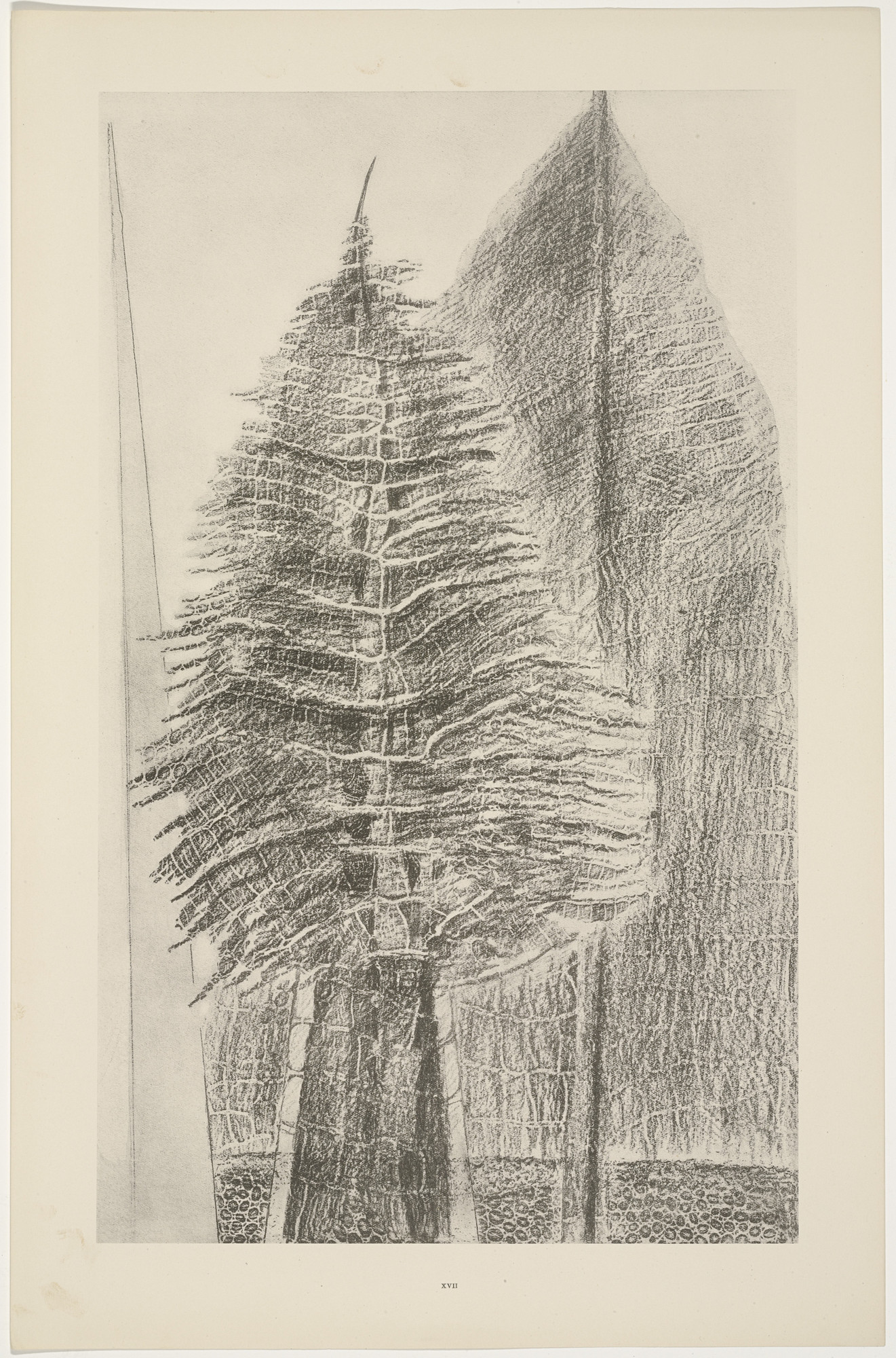 Max Ernst. The Fascinating Cypress (Le Fascinant cyprès) from Natural History (Histoire naturelle). c. 1925, published 1926