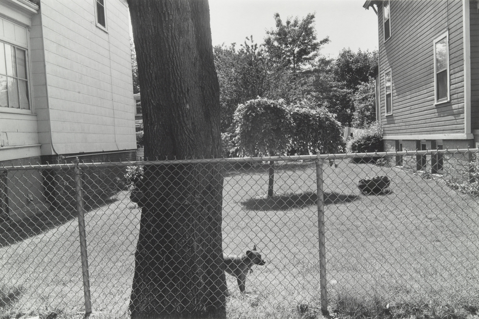 Thomas Roma. Speedy, Sheepshead Bay, Brooklyn. 1974