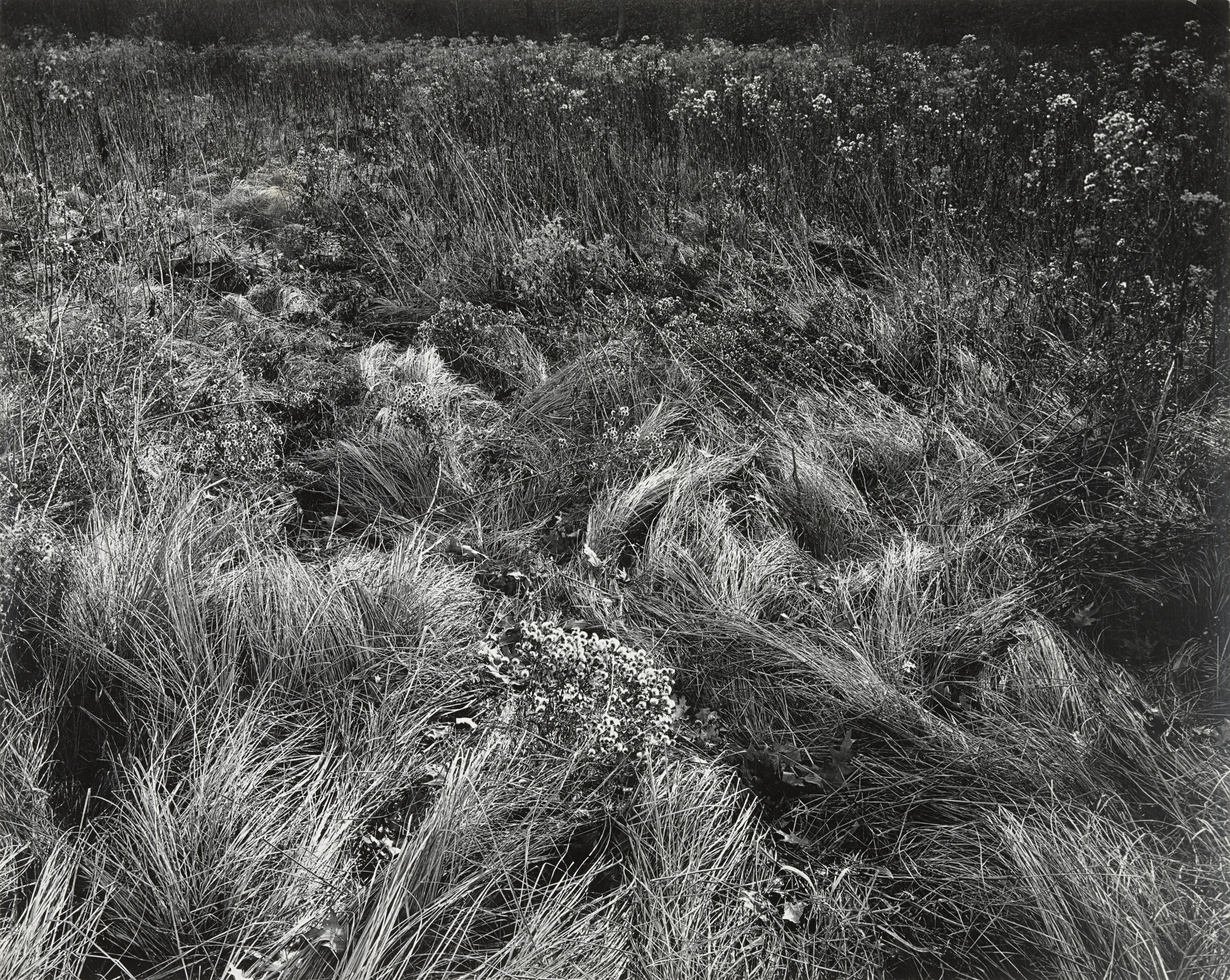 Harry Callahan. Michigan. c. 1950