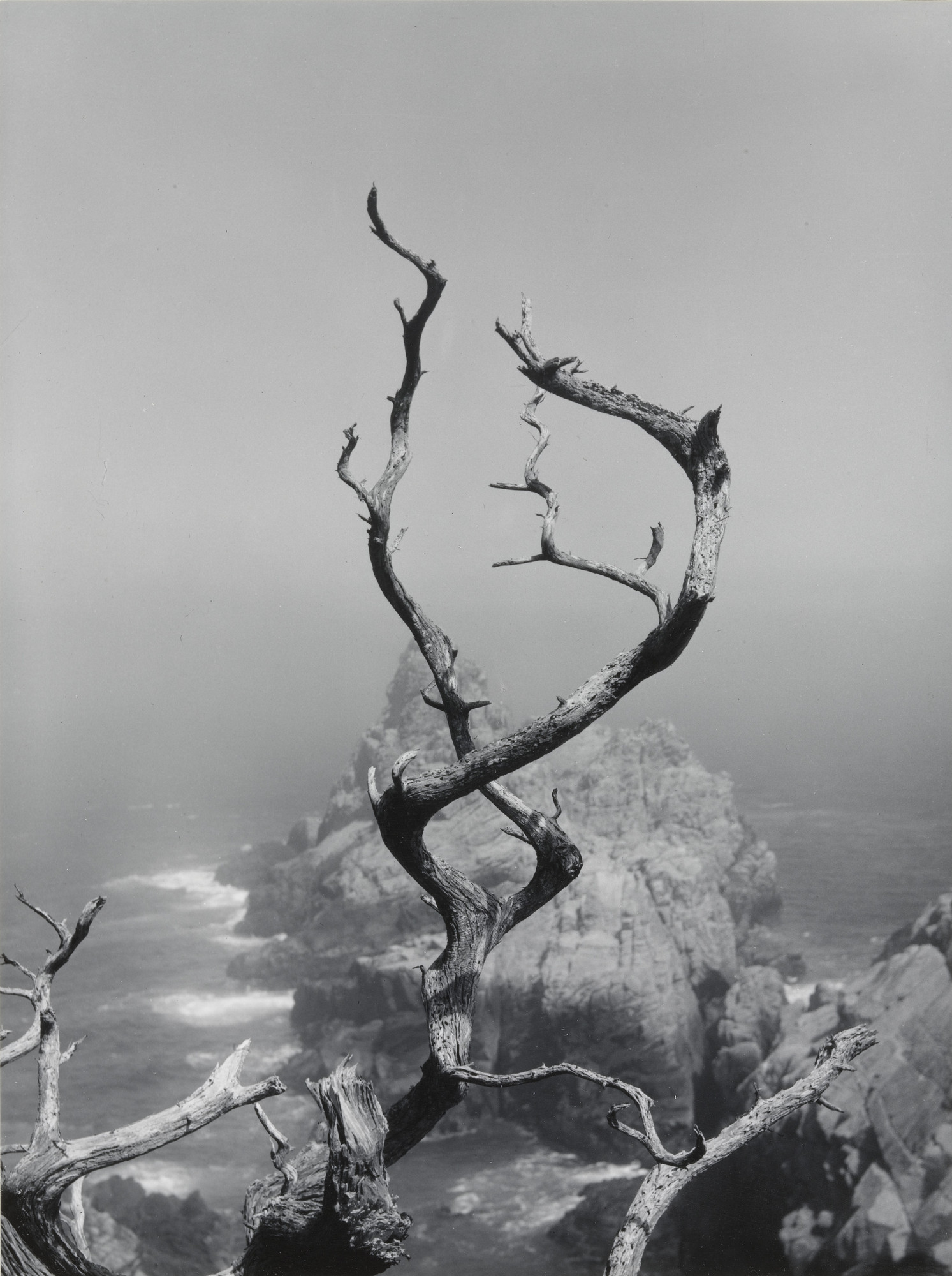 Minor White. Twisted Cypress and Sea. 1950