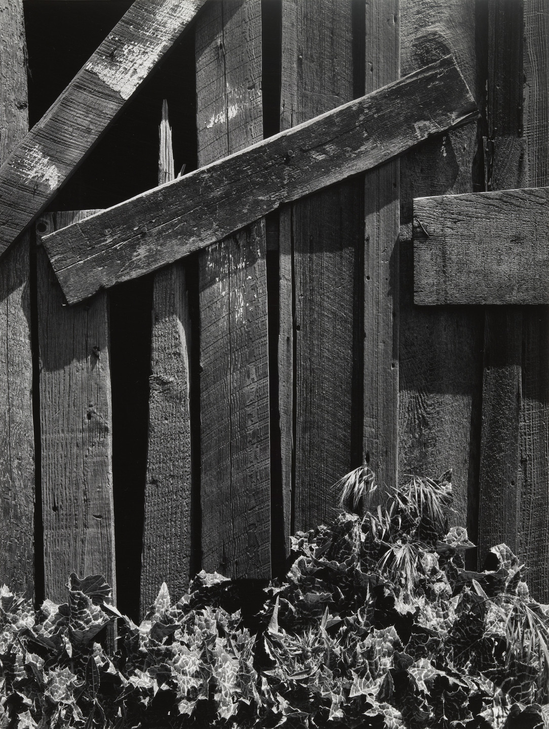 Ansel Adams. Boards and Thistles. 1932