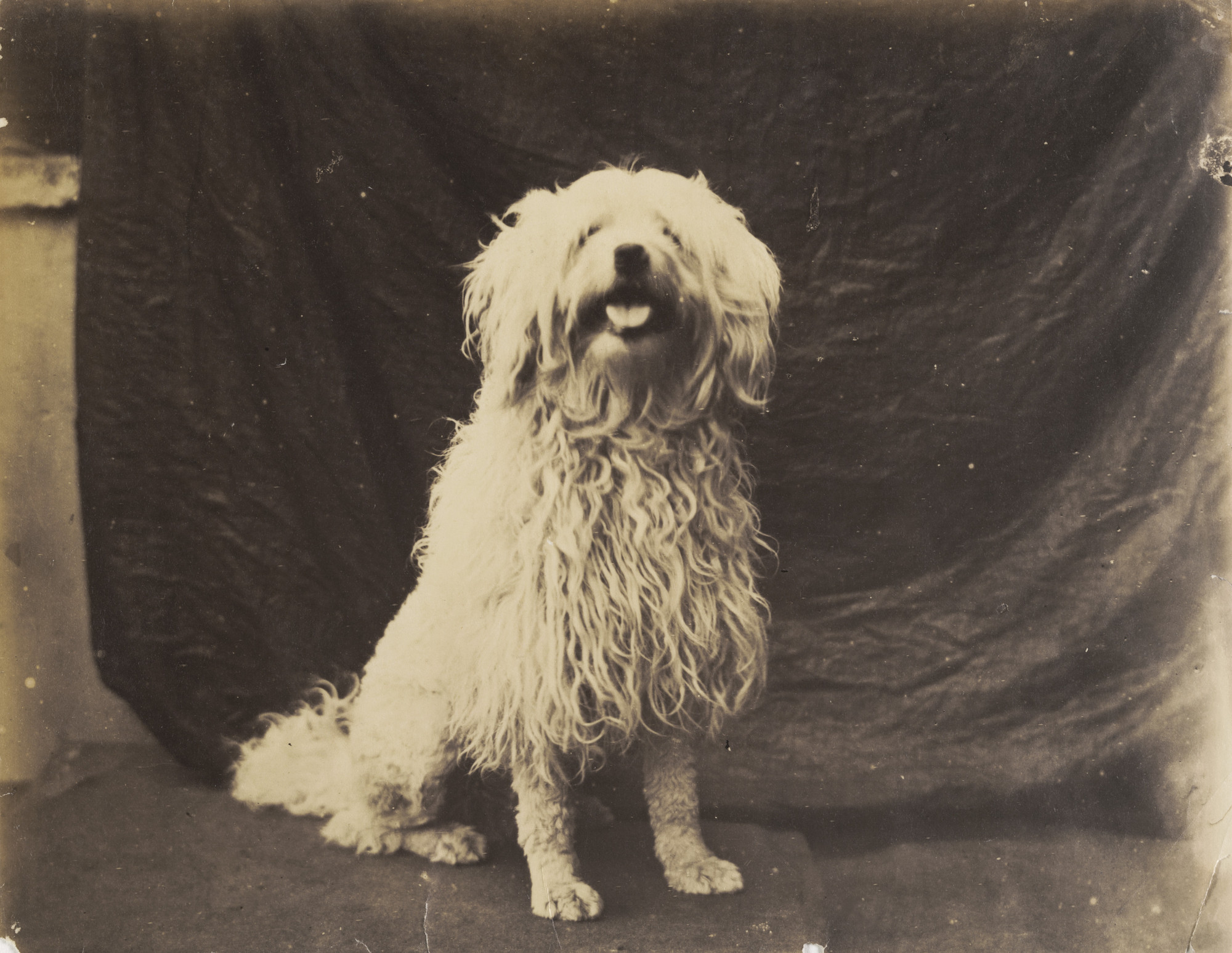 Charles Marville. Dog. 1860s?