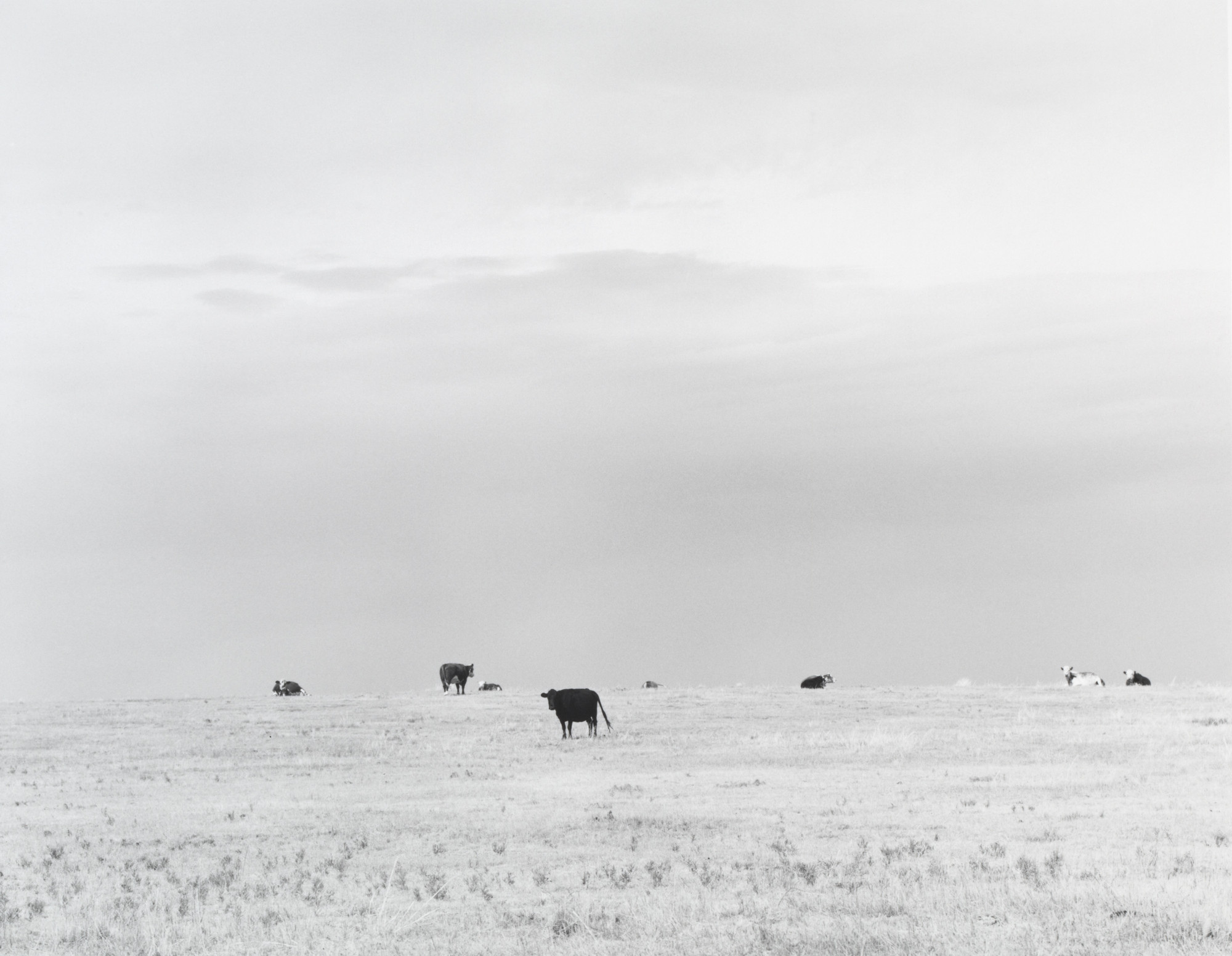 Robert Adams. North of Briggsdale, Colorado. 1973