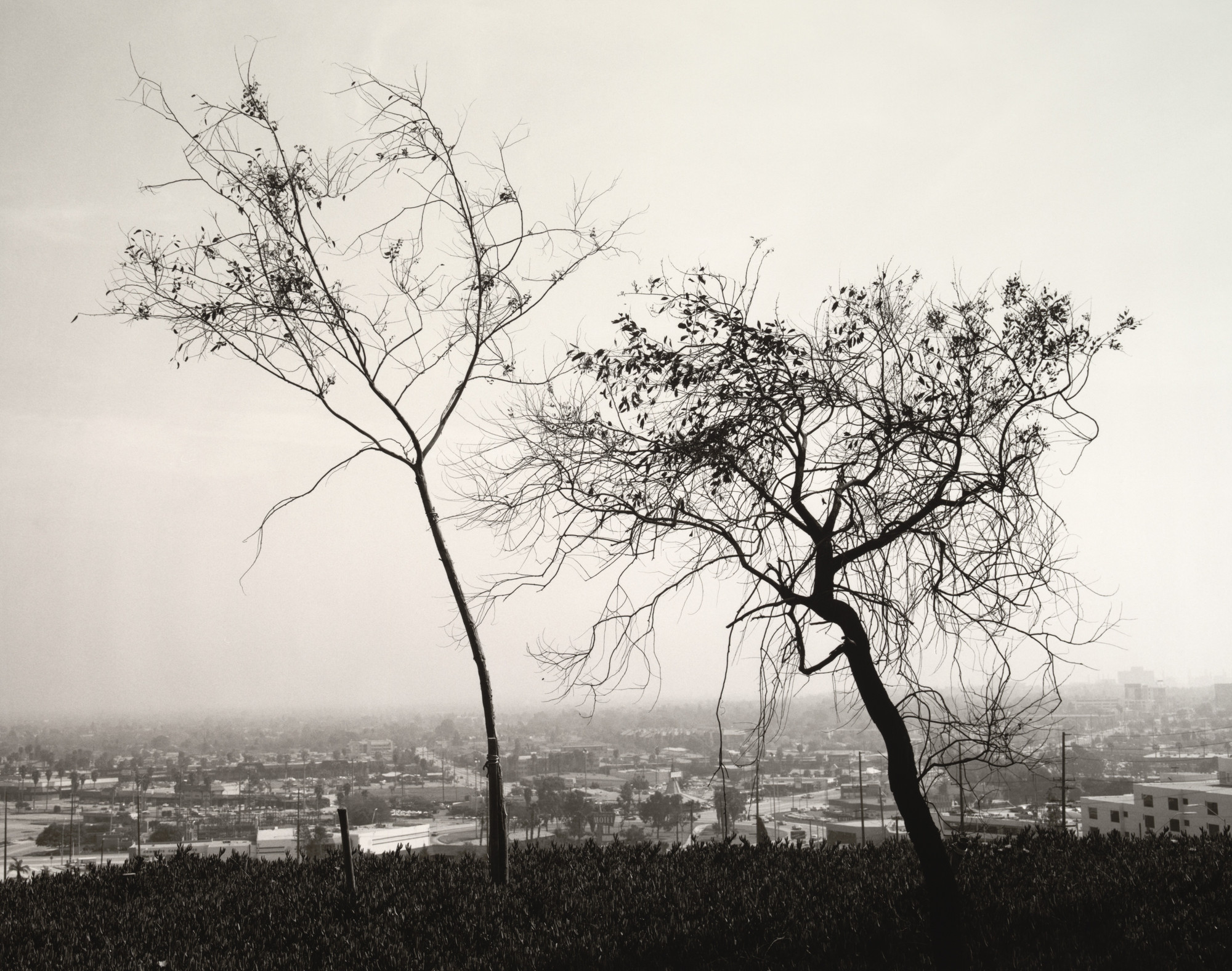 Robert Adams. From Signal Hill, Looking South over Long Beach. 1983
