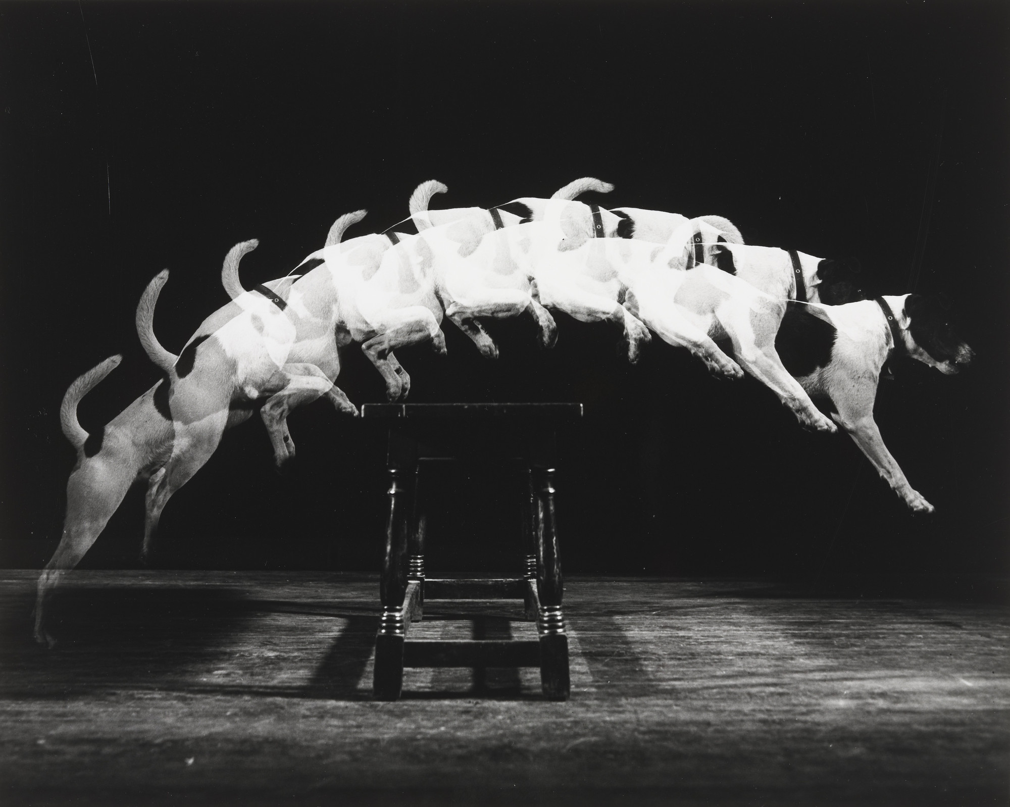 Harold Eugene Edgerton. Jackie Jumps a Bench. 1938