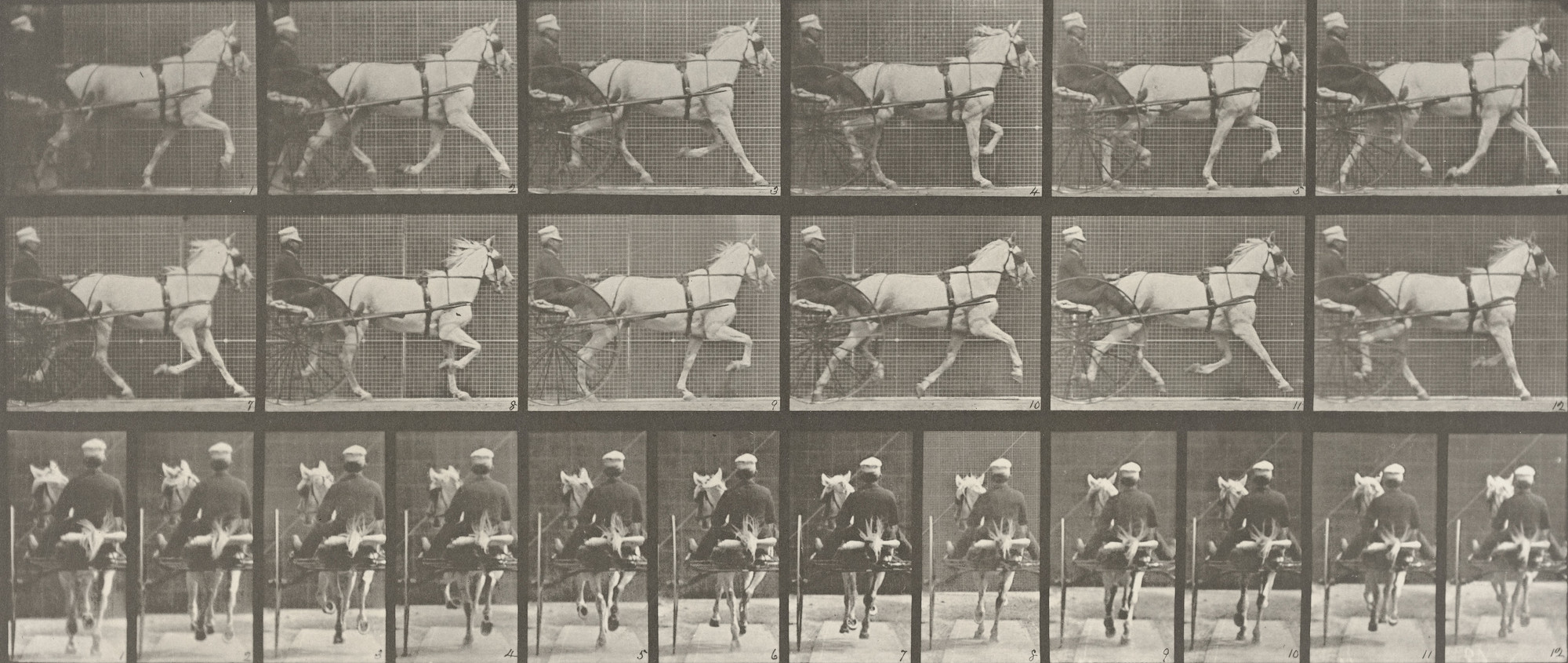 "Eadweard J. Muybridge. ""Katydid"" Trotting, Harnessed to Sulky: Plate 611 from Animal Locomotion (1887). 1884-86"