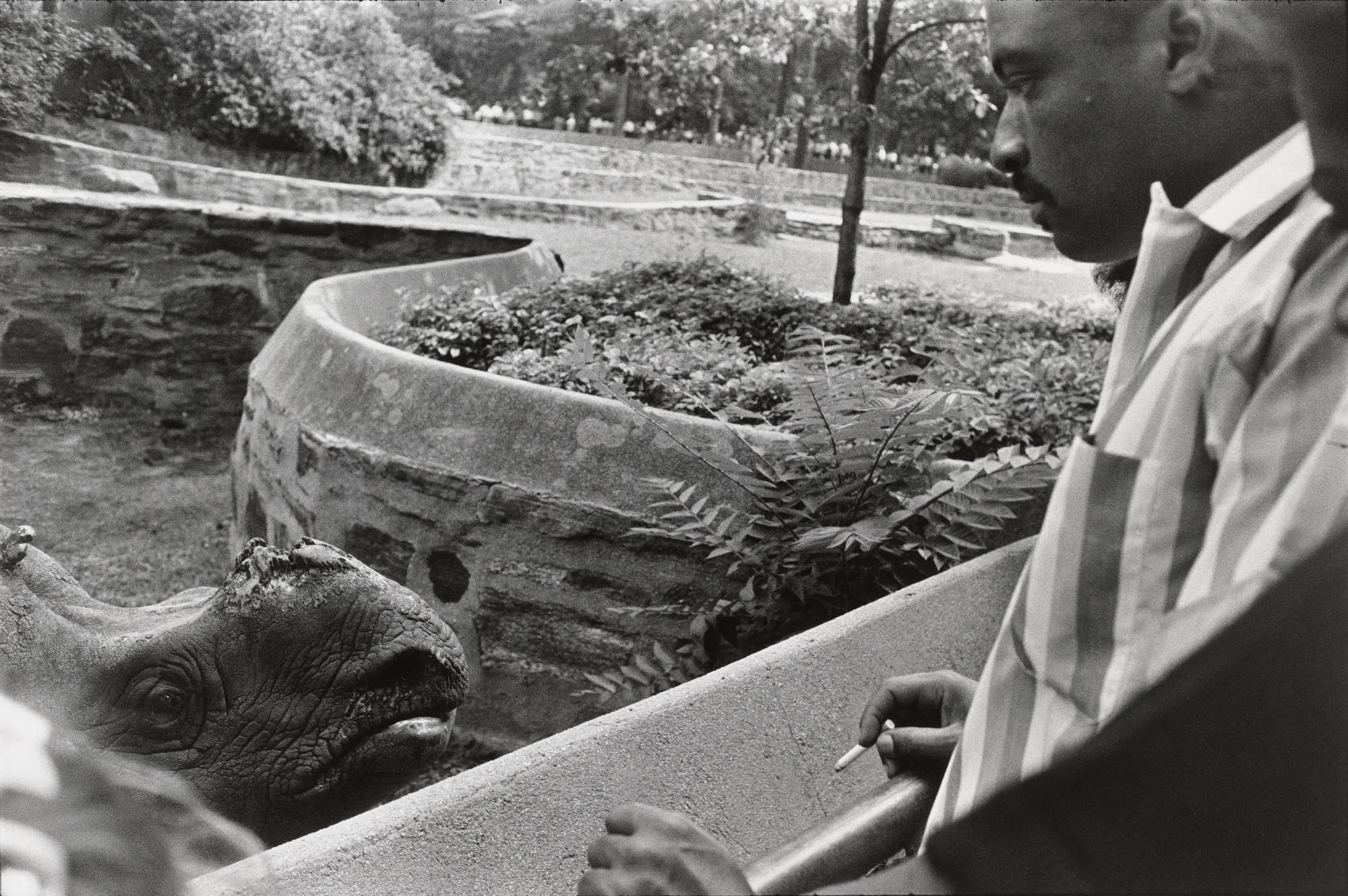 Garry Winogrand Bronx Zoo New York 1963 Moma
