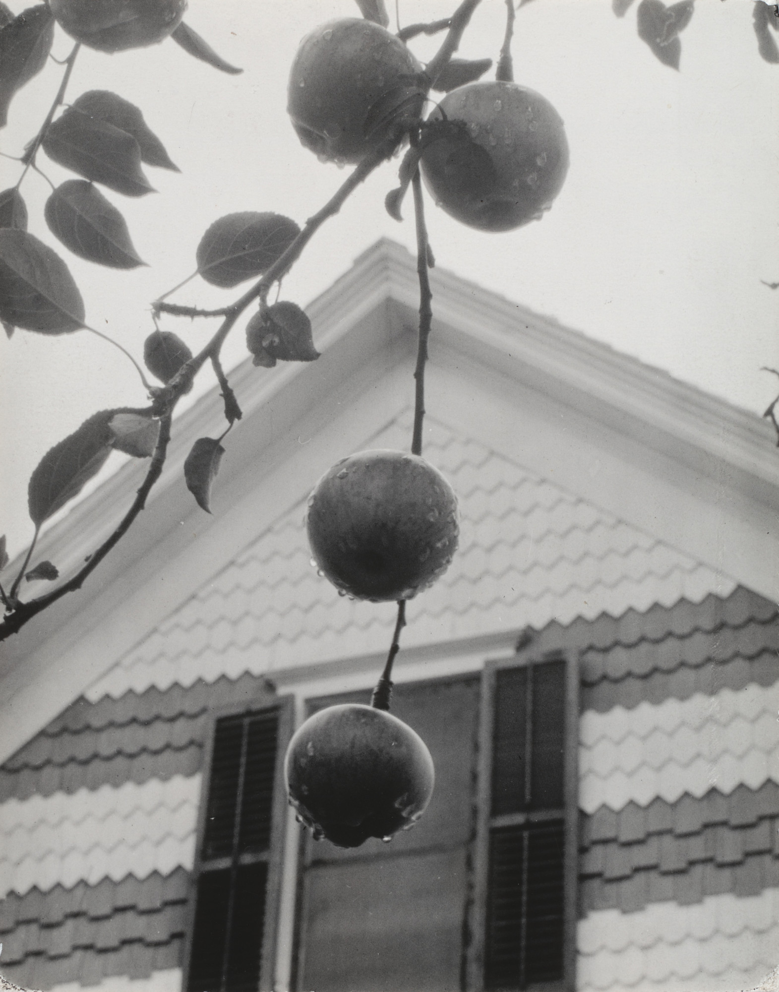 Alfred Stieglitz. Apples and Gable, Lake George. 1922