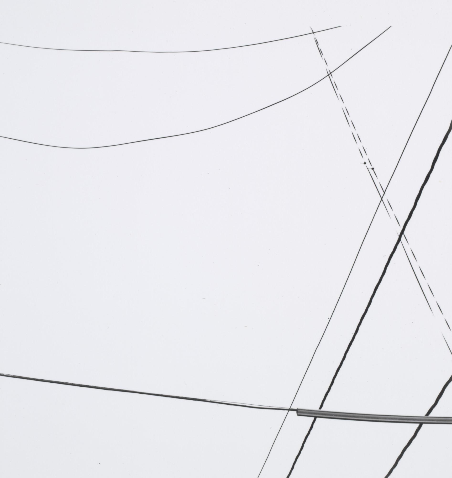 Harry Callahan. Telephone Wires. c. 1945 | MoMA