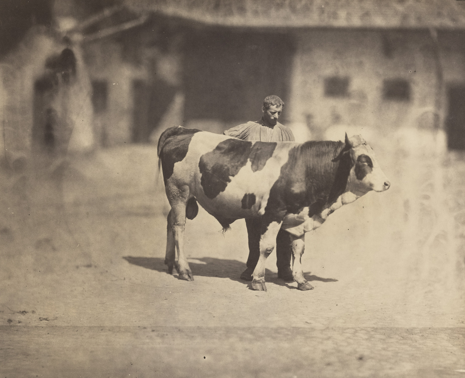 Adolphe Braun. Study of a Bull with Handler. 1850s