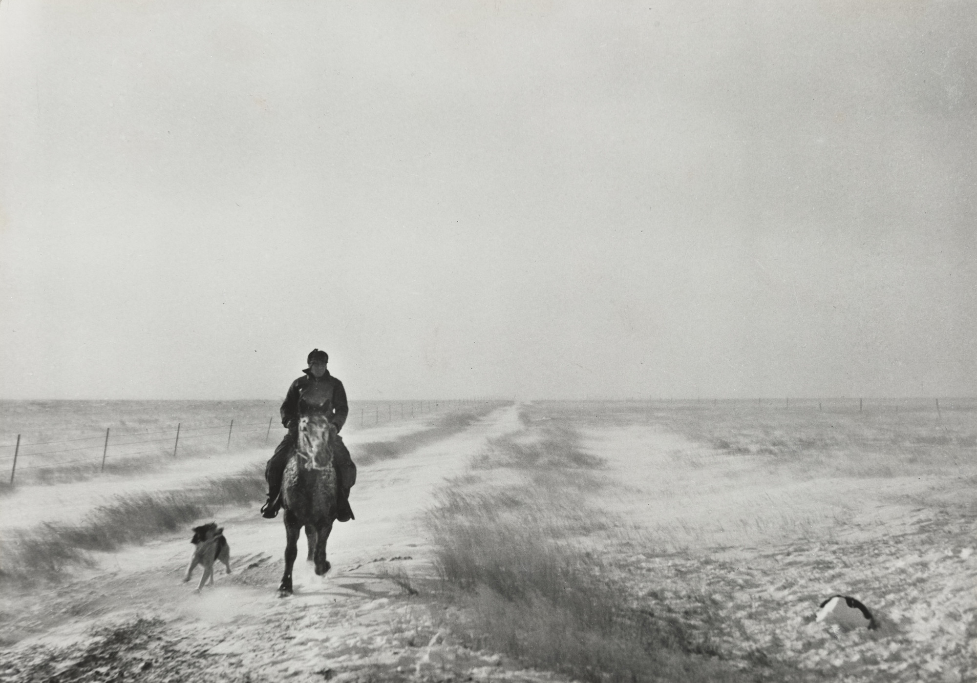 John Vachon. Riding Out to Bring the Cattle, First Stages of Snow Blizzard, Lyman County South Dakota, (Rider in the Snow). 1940