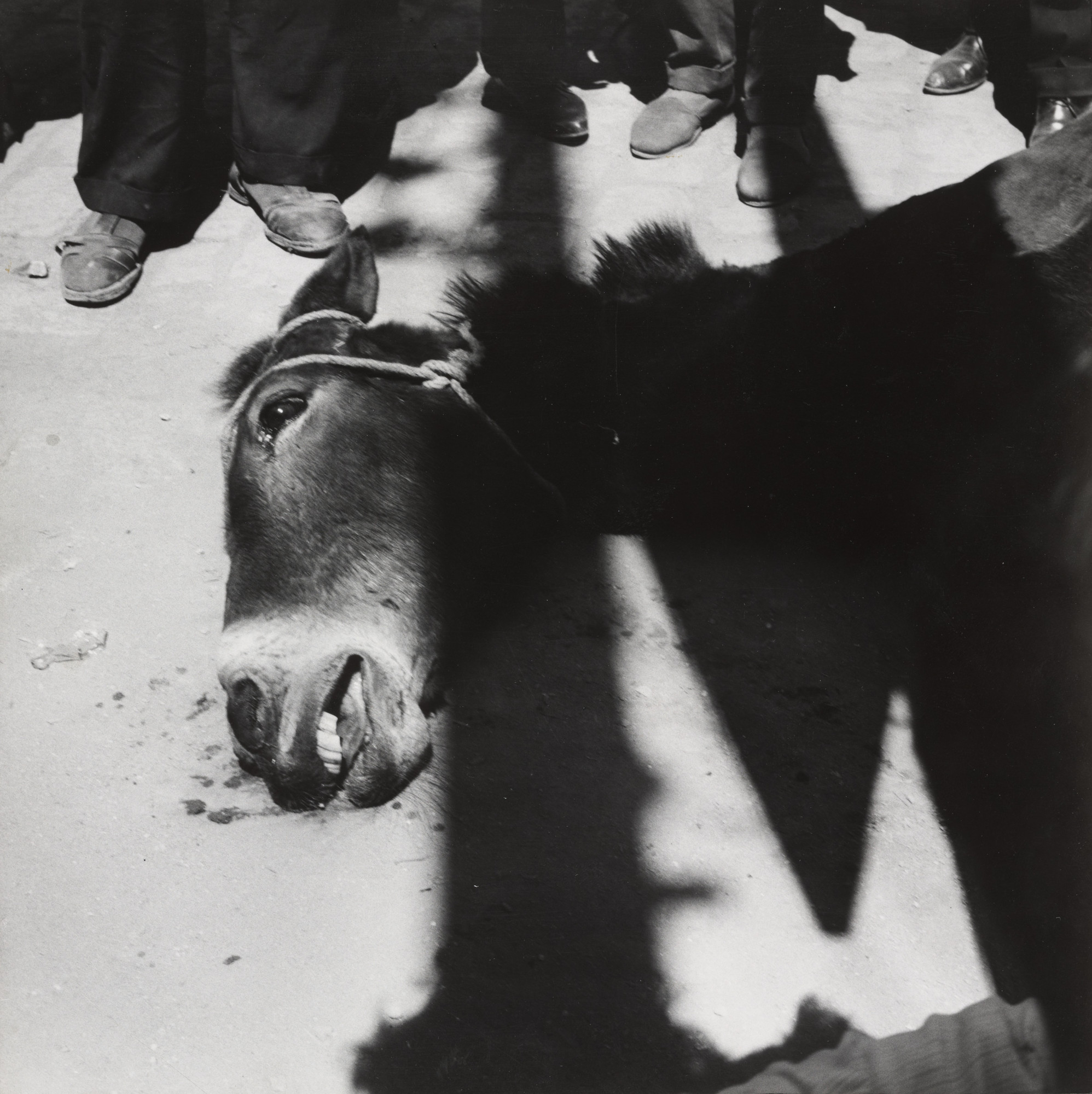 Claudia Andujar. Dying Donkey at the Seville Fair. 1959
