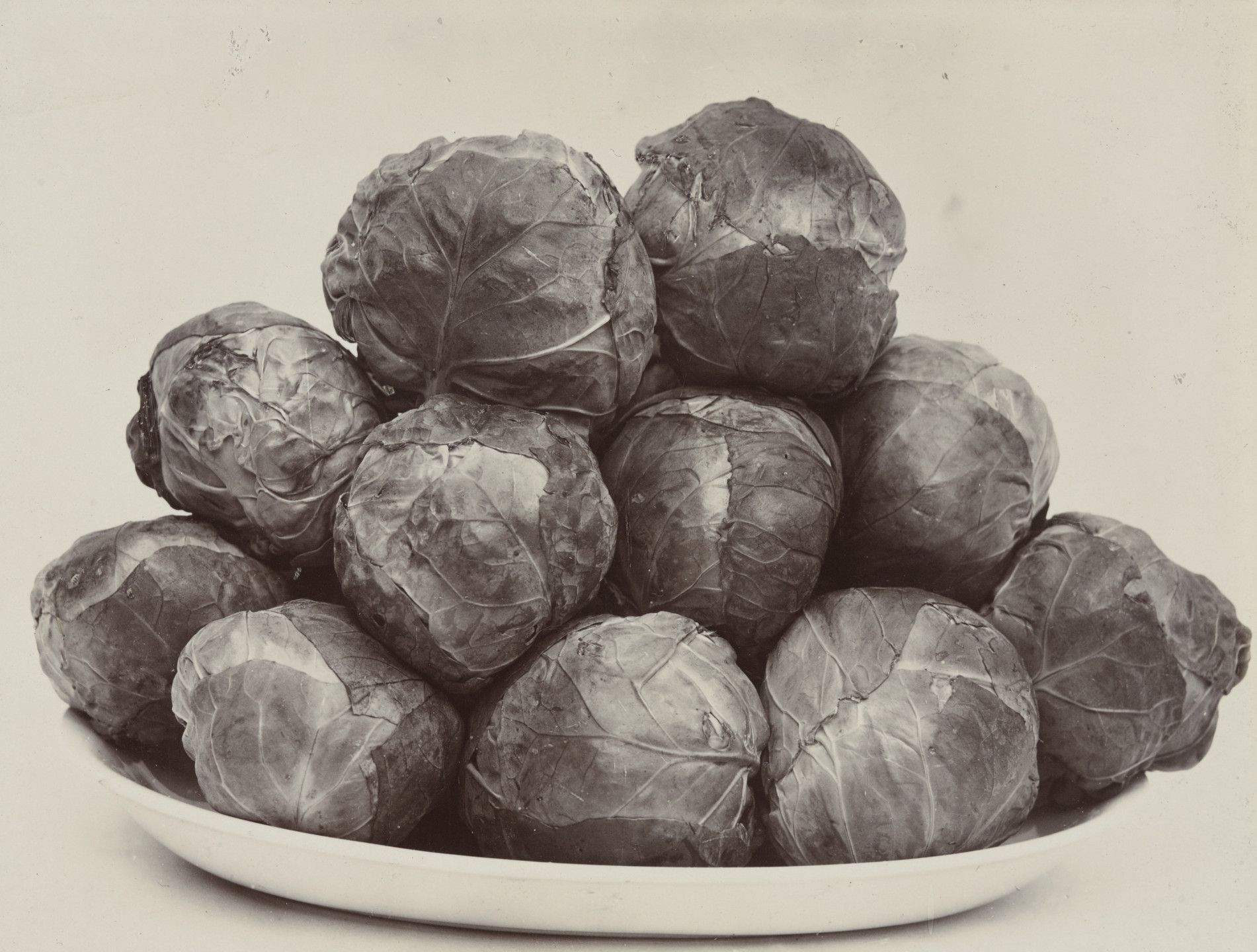 Charles Harry Jones. Brussels Sprouts. c. 1900
