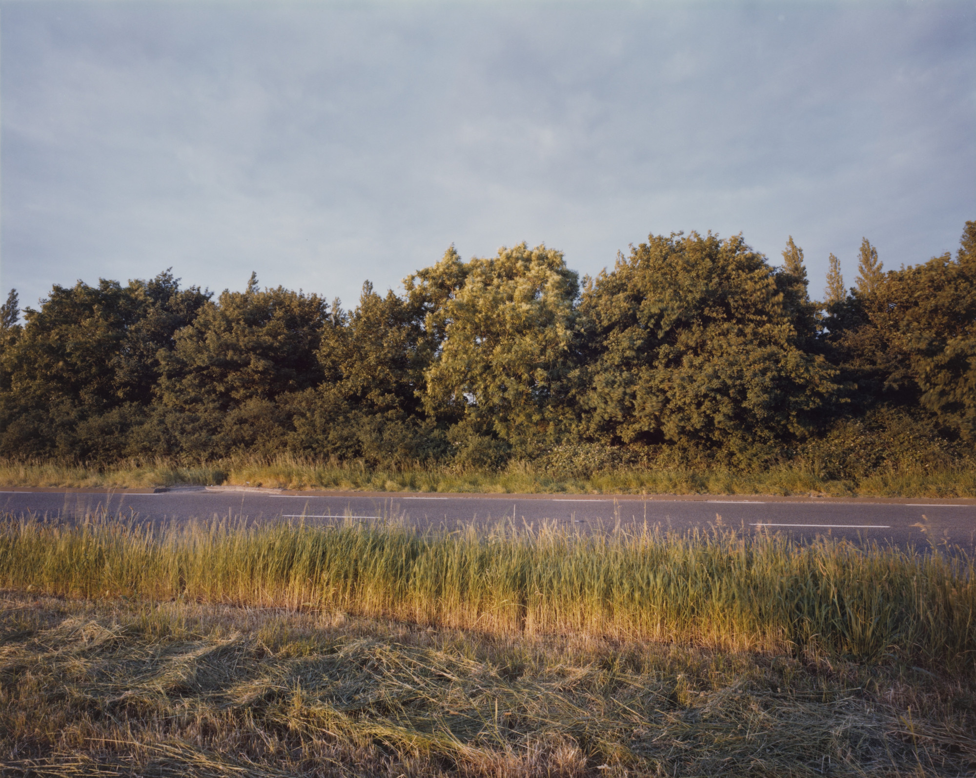 Paul Graham. Hedge in Wind, Bedfordshire from the portfolio A1: The Great North Road. June 1982