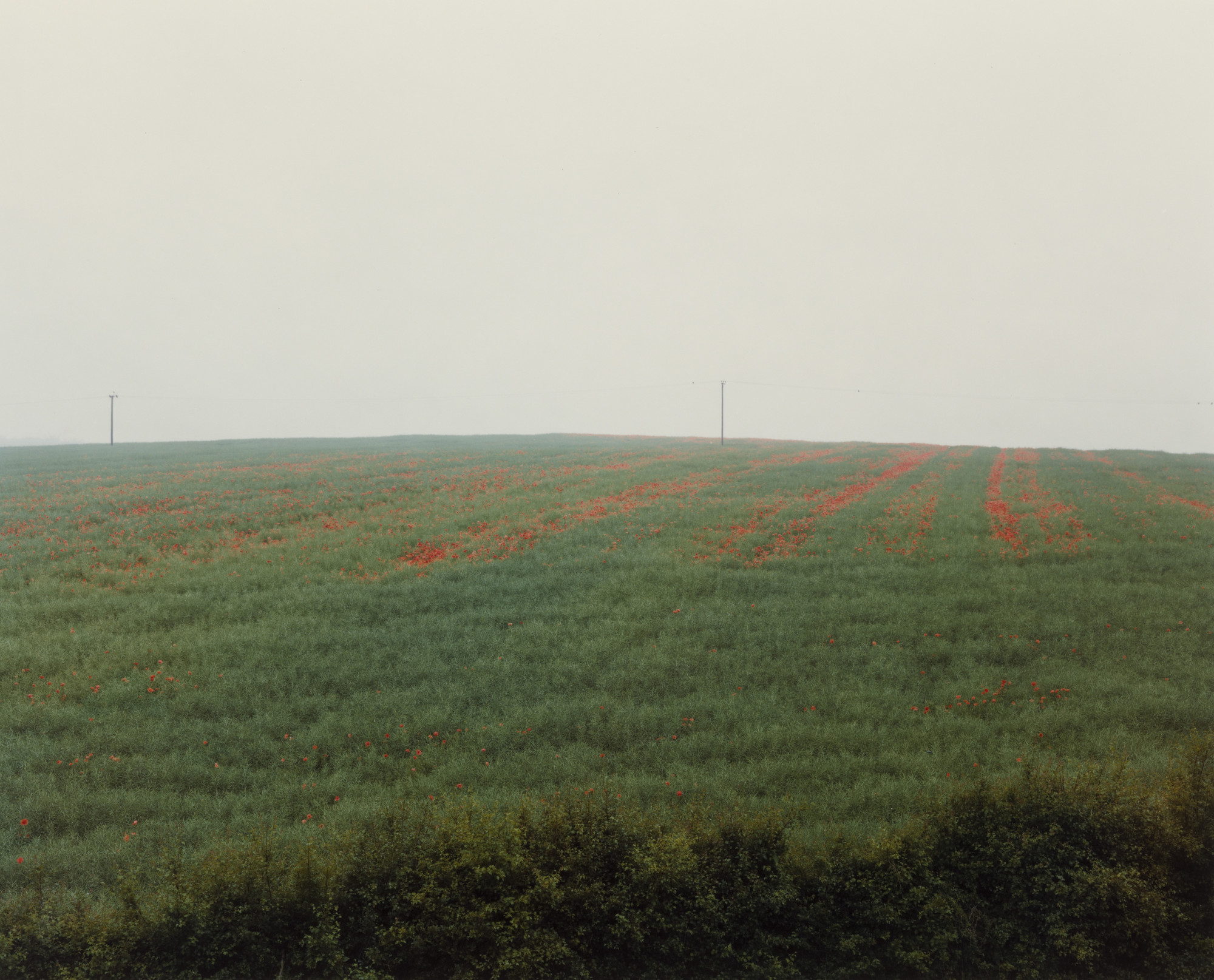 Paul Graham. Poppies in Mist, Bramham, West Yorkshire from the portfolio A1: The Great North Road. May 1982