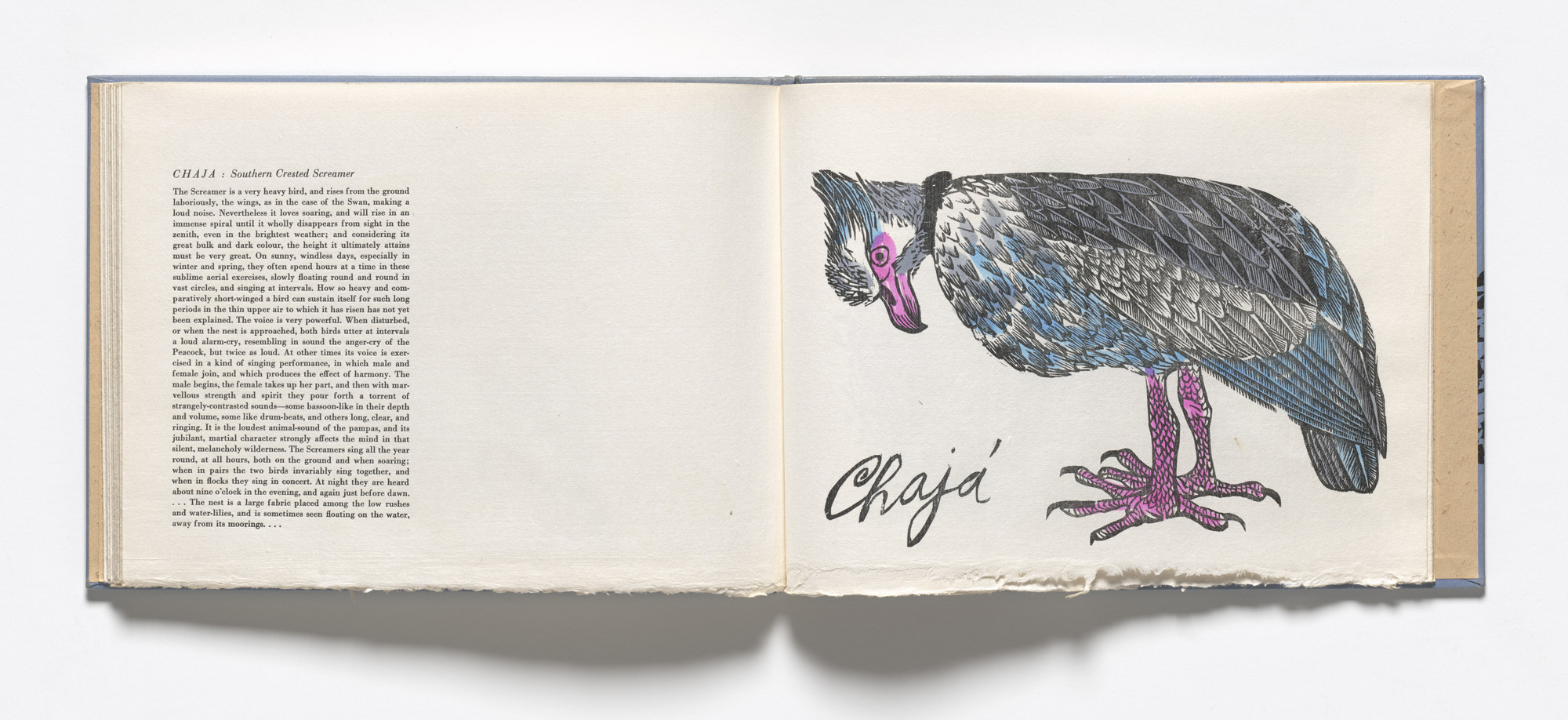 Antonio Frasconi. Chaja, Southern Crested Screamer (plate, folio 25) from Birds from my Homeland. 1958