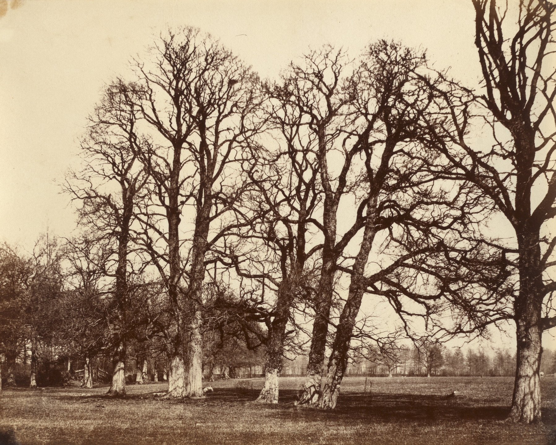 Alfred Capel Cure. Trees, Blake Hall. March 1857