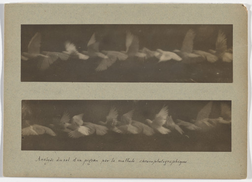 Étienne-Jules Marey. Analysis of the Flight of a Pigeon by the Chronophotographic Method. 1883-87