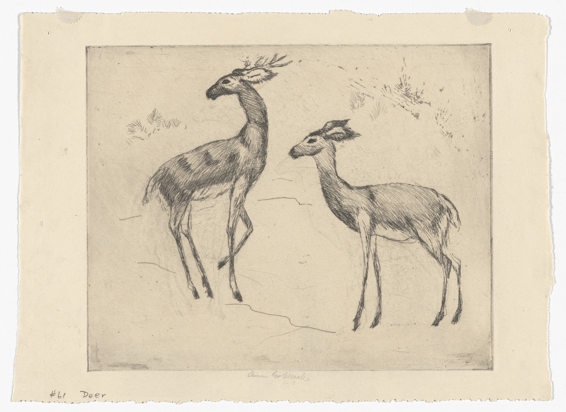 Anne Goldthwaite. Stag and Doe (No. 1). c. 1928